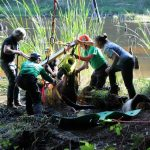 A horse stuck in the mud is rescued by the technical animal rescue team.