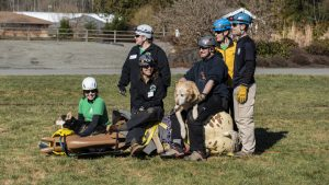 Six WASART volunteers and two dogs on top of our horse 'manikin' Joey, being pulled on a rescue-glide during training.