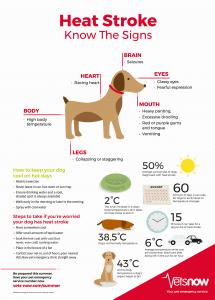 Heat Stroke Signs in Dogs